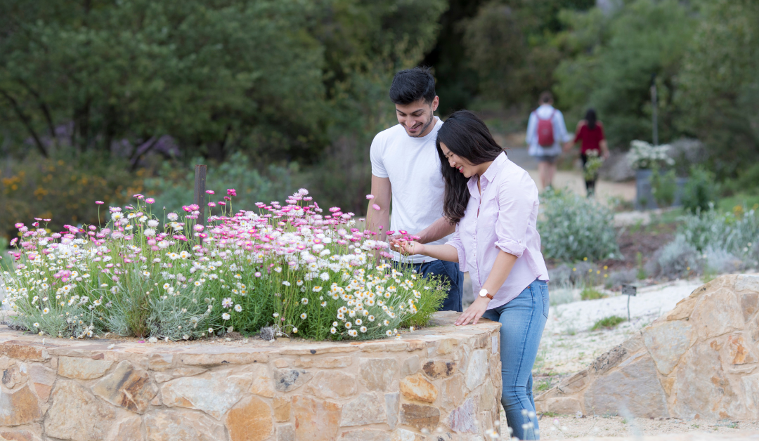 The Australian National Botanic Gardens on celebrating 50 years during a challenging year